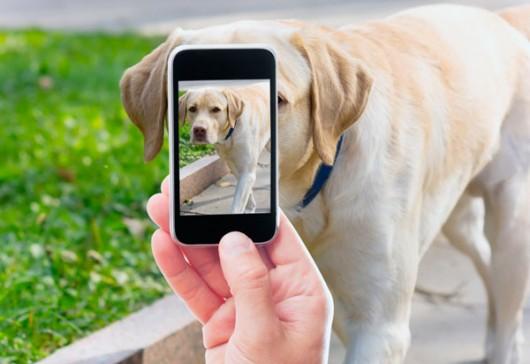 My Pet, primul portal mobil din România dedicat iubitorilor de animale