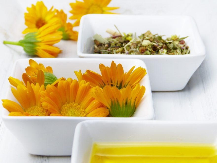 plante medicinale. terapie naturista, medicina traditionala