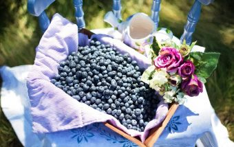blueberries-870515_960_720