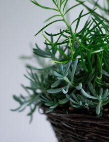 Plantele fac bine aerului din casa