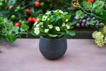 plantele care cresc in ghiveci au nevoie de atentie