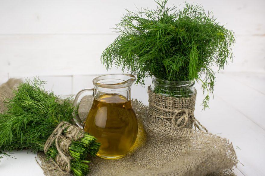 buchetele de marar, planta aromatica