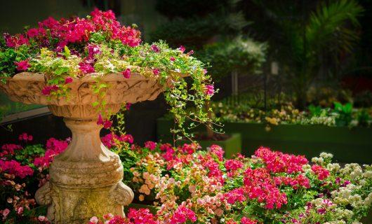 O grădină botanică din Seattle te ajută să te relaxezi