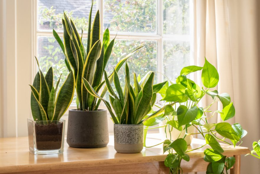 plante depoluante