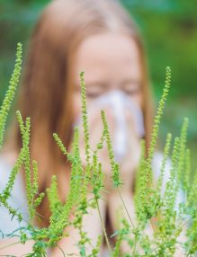 alergie ambrozie
