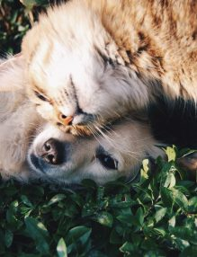 4 boli frecvente ale animalelor de companie
