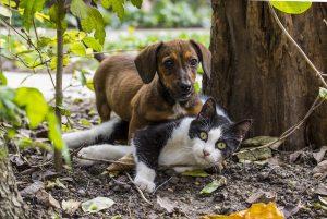 animale companie