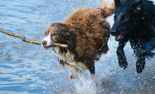 (P) 5 provocări pentru proprietarii noi de câini și cum treci cu ușurință peste ele